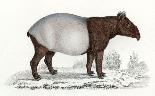 Formation à l'outil Tapir