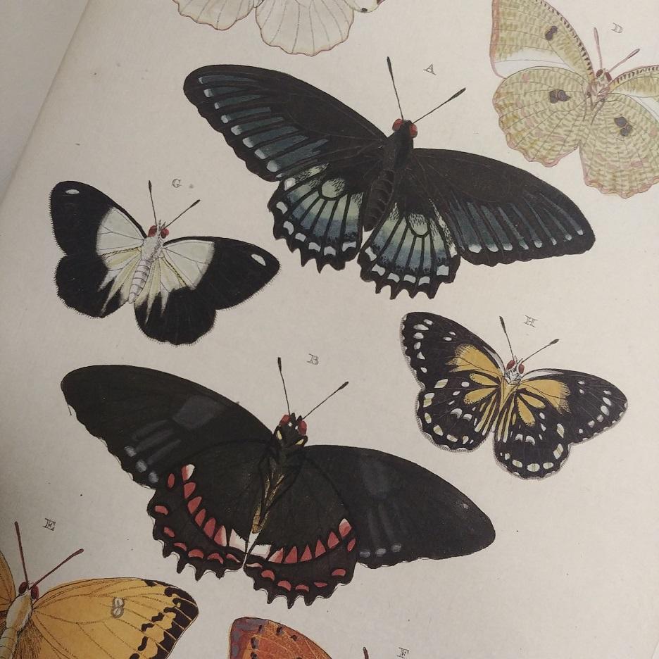 Une formidable encyclopédie sur les papillons